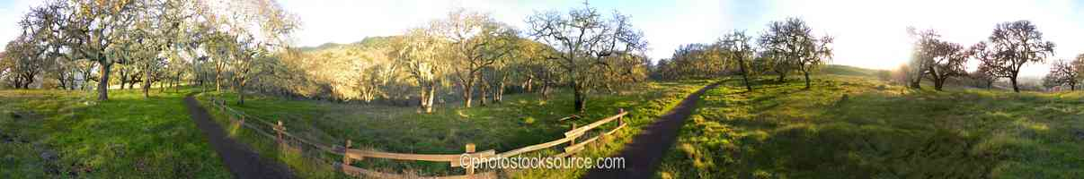 Annadel Park Oaks