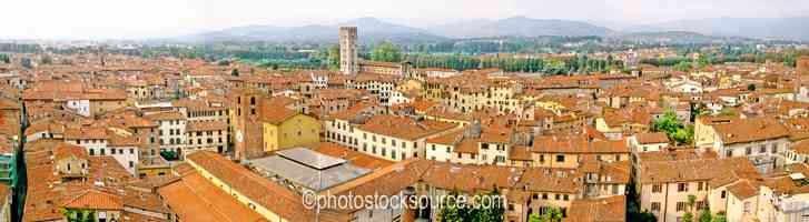 From the Torre Guinigi