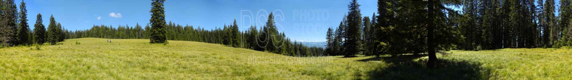 Sourgrass Mountain Meadow