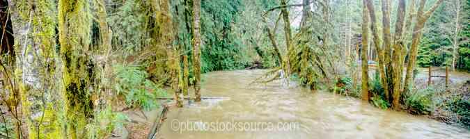 Chickahominy Creek Flood