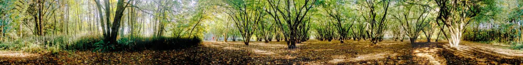 Dorris Ranch Filbert Grove