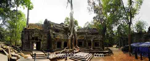 Temple Under Tree Roots