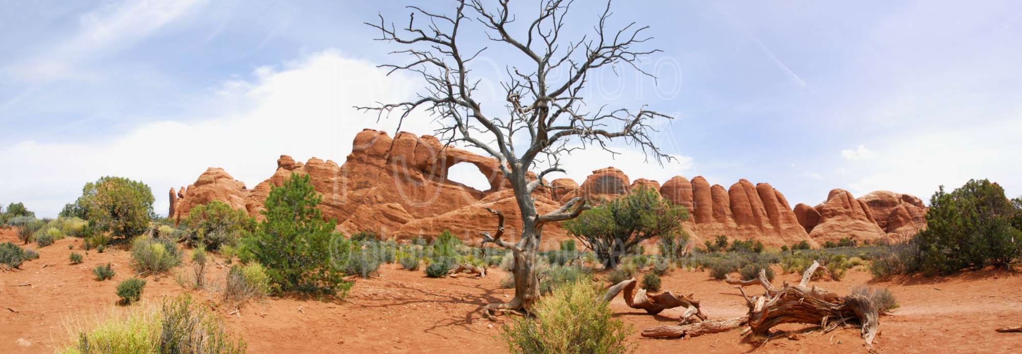 Skyline Arch and Tree