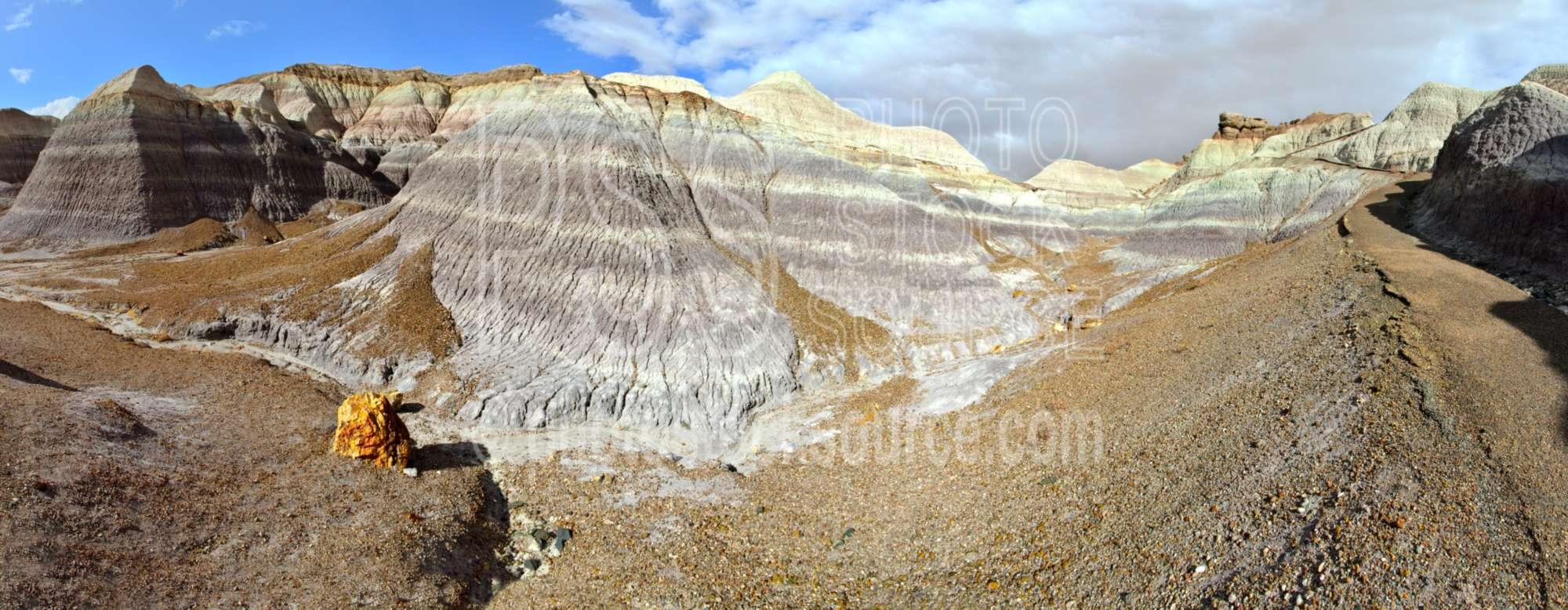 Blue Mesa Trail Petrified Wood